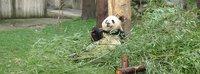 Китай: Чэнду(панды)-Эмейшань-Лэшань-Пекин