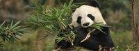 Китай: Чэнду - Сиань - Пекин